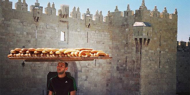 Hostel Palestine Volunteering