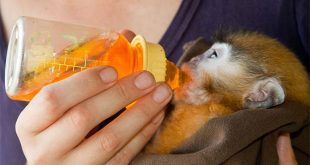 Animal Sanctuary Volunteering Thailand