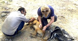 Be a Animal Rescue Volunteer with us in India