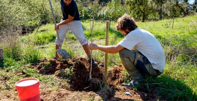 Volunteer in Portugal