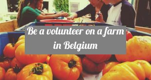 Permaculture Farm Volunteering