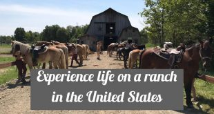 Volunteer on a horse ranch in America