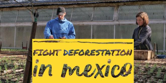 reforestation program in Mexico