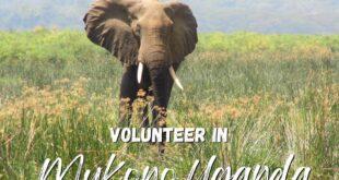 Volunteer in Uganda with us